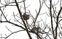 Yunnan - Squirrel in a Tree