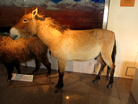 Xinjiang - CAS Museum of Xinjiang Ecology and Geography