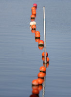 Forest Park - Orange Marker Buoys
