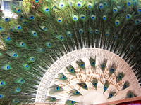 Yunnan - Peacock Eye Fan at Galanba Dai Park (橄榄坝傣族园)