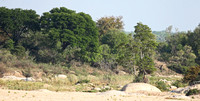 Sabi Sands Forested Landscape
