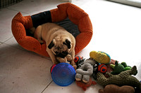 Resting Puppy With Toys