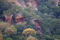 Tsavo West — Forested Cliffs