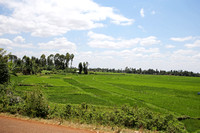 Mwea — Rice Cultivation