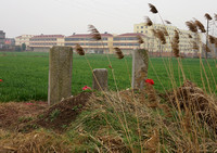 Graves in Farm Fields