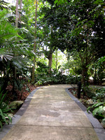 Singapore - National Botanic Gardens Walkway (S95 Images)