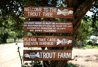 Welcome to the Trout Tree