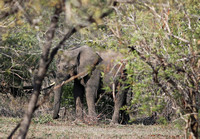 Leopard Hills — Elephants Passing the Plunge Pool